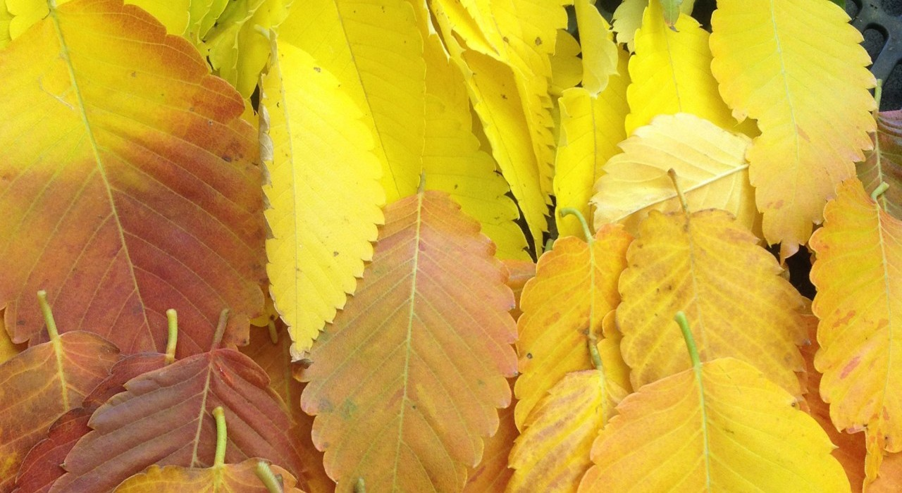 Five Steps to Preparing Your Landscape for Winter